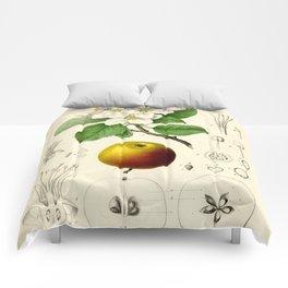 Antique Apple Study Comforters