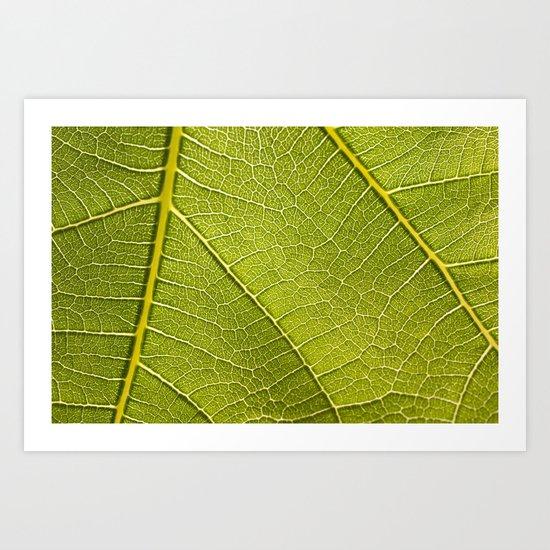 Fig Leaf Art Print