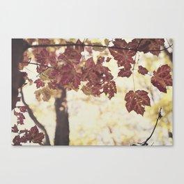 Fall Leaves 4 Canvas Print