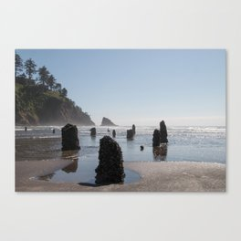 Neskowin Ghost Forest Canvas Print