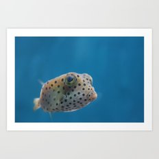Yellow Boxfish Art Print
