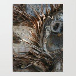 Owly Natural DP170707e Poster
