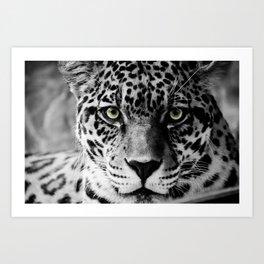 Leopard B&W Art Print