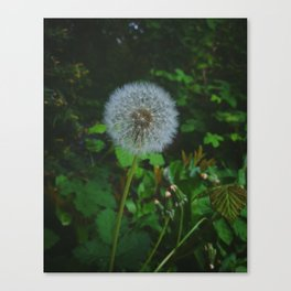 Dandelion Magic Canvas Print