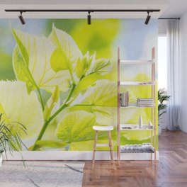 Delicate leaves lit by the spring sun Wall Mural