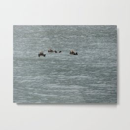 USA - ALASKA - Three otters Metal Print