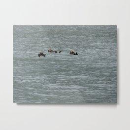 USA - ALASKA - Three otters Metal Print
