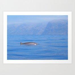 Beaked whale in the mist Art Print