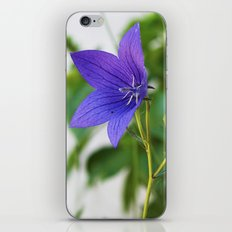 Bellflower iPhone & iPod Skin