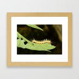 Catapillar on Leaf Framed Art Print
