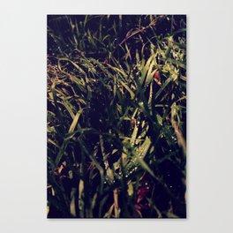 Im Wald Canvas Print