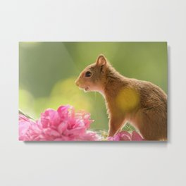squirrel with peony flowers Metal Print