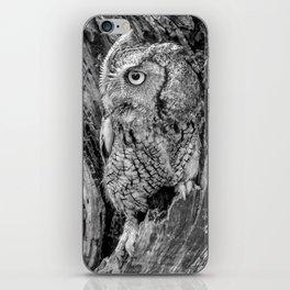 Echo the Screech Owl by Teresa Thompson iPhone Skin