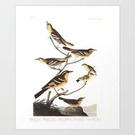Bullock s oriole, Birds of America, Audubon Plate 433 Art Print
