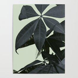Pachira Aquatica #3 #foliage #decor #art #society6 Poster