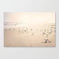 Bird Beach Canvas Print