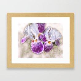 Gladiolus and ladybug Framed Art Print