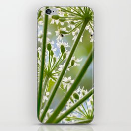 Delicate cow parsley iPhone Skin