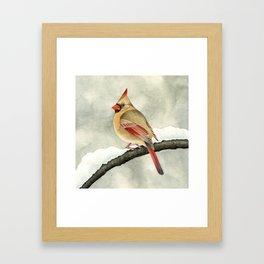Snowy Cardinal Framed Art Print