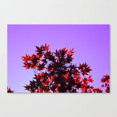 Fall Color, Autumn leaves, Blue sky, Landscape photography, Trees, Nature Canvas Print
