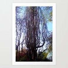 Big hazelnut - shrub. Art Print