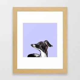 Italian Greyhound Illustration Framed Art Print