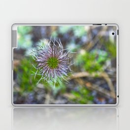Prairie smoke wildflower Laptop & iPad Skin