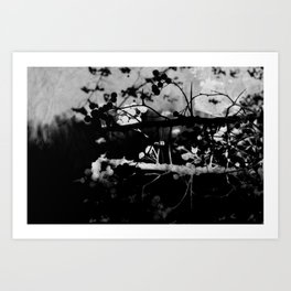 Out On A Limb II Art Print