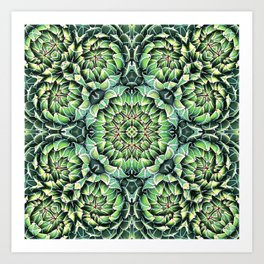 Succulent Splendor Three Art Print