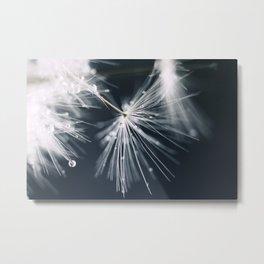dandelion white Metal Print