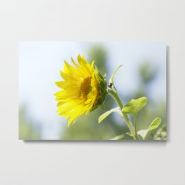 Ladybug and it's Sunflower Metal Print