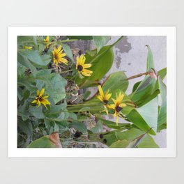 Sunshine Yellow- 1  Art Print