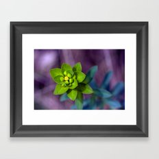 Wild euphorbia 31 Framed Art Print