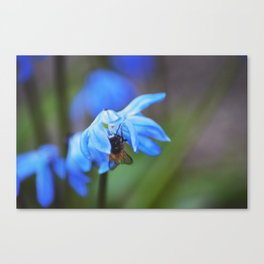 Feasting on Beauty Canvas Print