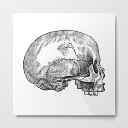 Skull 12 Metal Print
