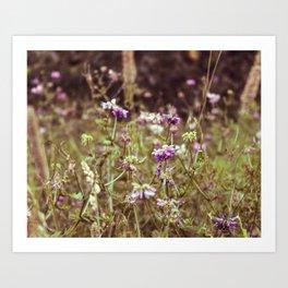 Vetch Wildflowers Art Print