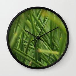 baby pine tree Wall Clock