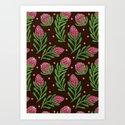 The Sweet Protea  by haidishabrina
