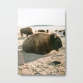relaxing in the sun Metal Print