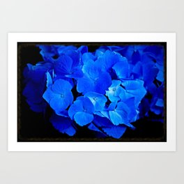Deep Blue Hydrangea Art Print