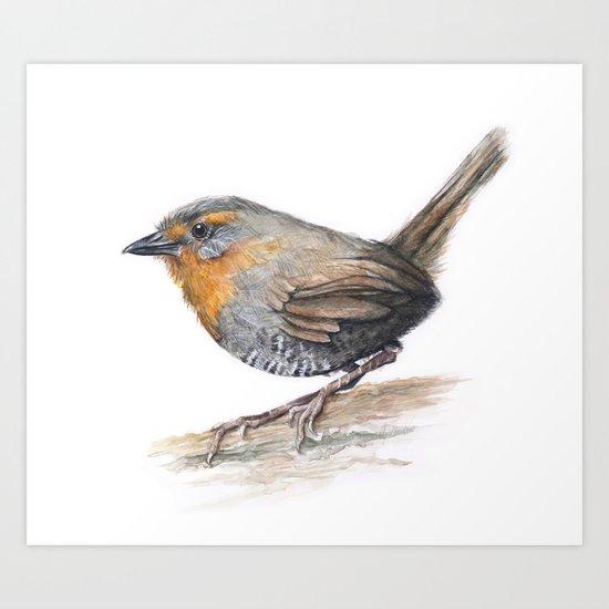 Chucao Bird Watercolor Animal Portrait Art Print