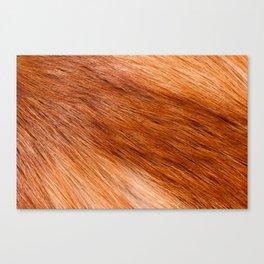 Red fox hairy fur texture cloth Canvas Print