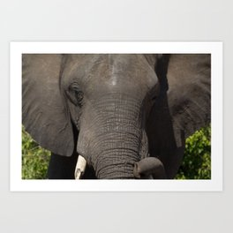 Elephant Detail Art Print