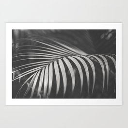 Palm Curves Art Print