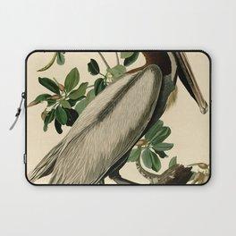 Brown Pelican (Pelecanus occidentalis) Scientific Illustration Laptop Sleeve