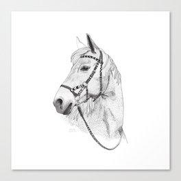 Inka horse Canvas Print
