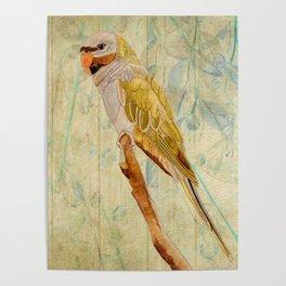 Derbyan Parakeet I Poster