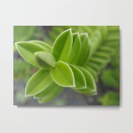 Plant! Metal Print