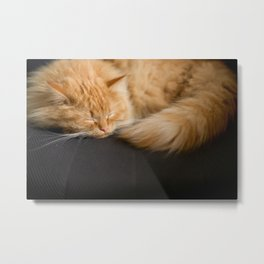 Fluffy Ginger Cat On Black Metal Print
