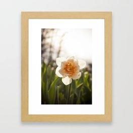 Happy Daisy at Spring Grove Cemetary and Arboretum, Cincinnati, OH Framed Art Print
